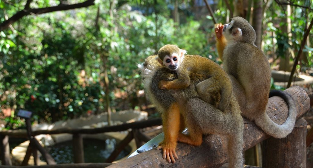 monkey jungle Sosua